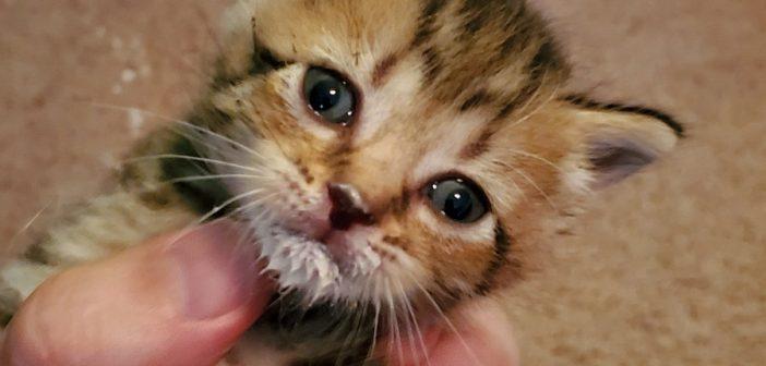 sister hazel kittens